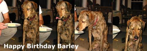 Happy Birthday Barley