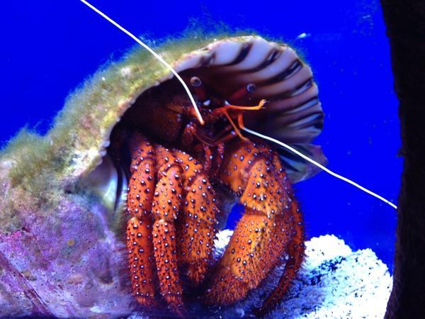 Tweet: First visit to the new Portland Aquarium. Lots of…